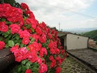 Flowers at Barbicaio