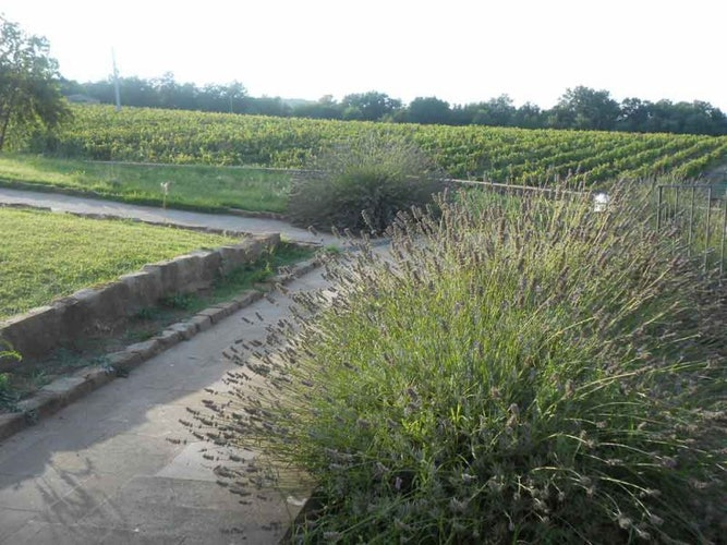 Set in a fully functional farm, enjoy the perfume of lavendar