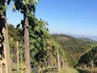 Agriturismo La Tinaia - Situato a breve distanza a piedi dai ristoranti