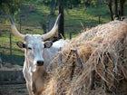 La Valentina with Tuscan farm animals, foxes, deer & organic farming