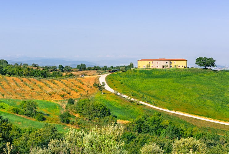 Agriturismo Poggio Mirabile - Extra virgin olive oil and the true flavors of Tuscany