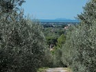 Visit the beaches, olive groves, vineyards & small hamlets of Tuscany
