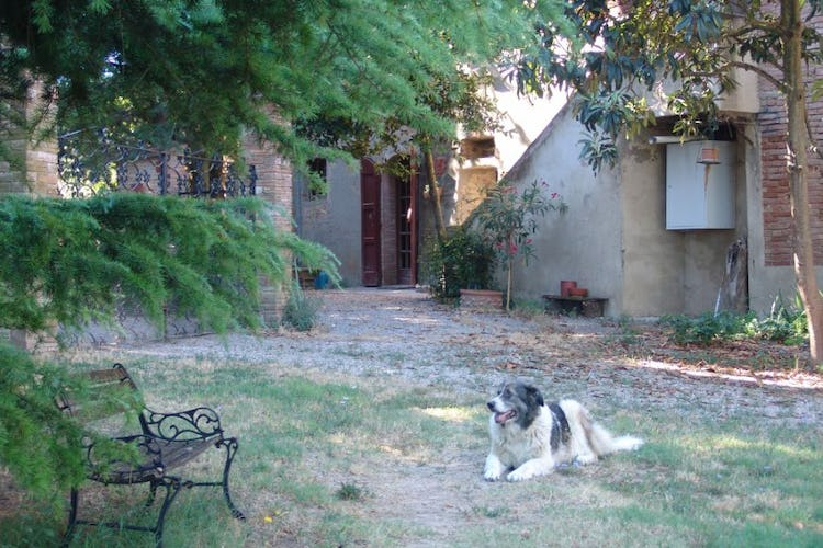 The common garden with the friendly dog of the owner