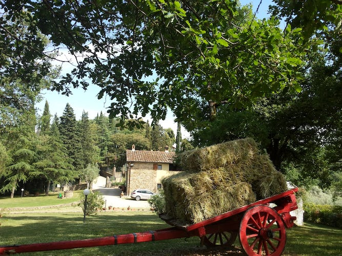 Poggio del Drago: An Authentic Tuscan Farmhouse