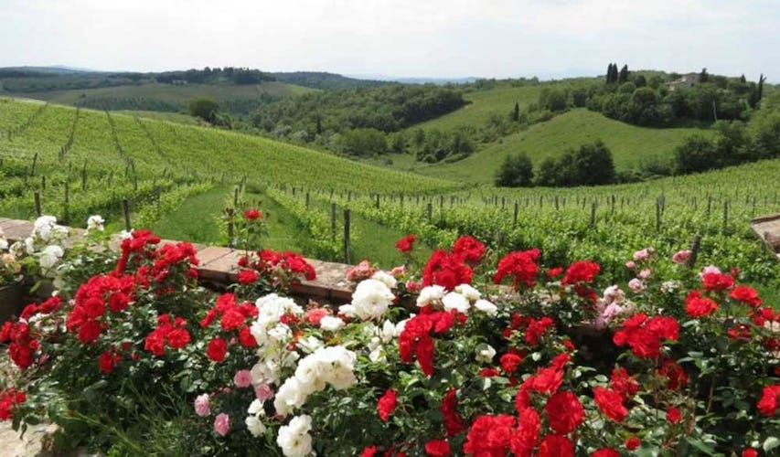Stunning views of the Chianti vineyards and flora