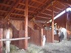 Agriturismo Borgo Tramonte cavalli