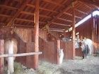 Farmhouse Borgo Tramonte Horses