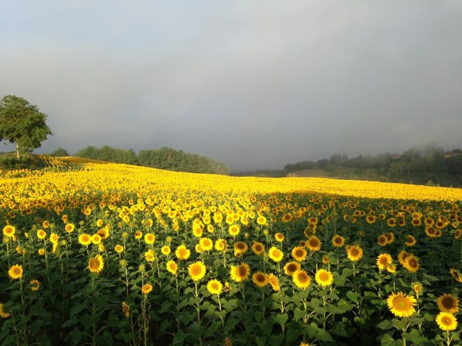 La meraviglia della valle del Mugello: fiori, vigneti ed uliveti