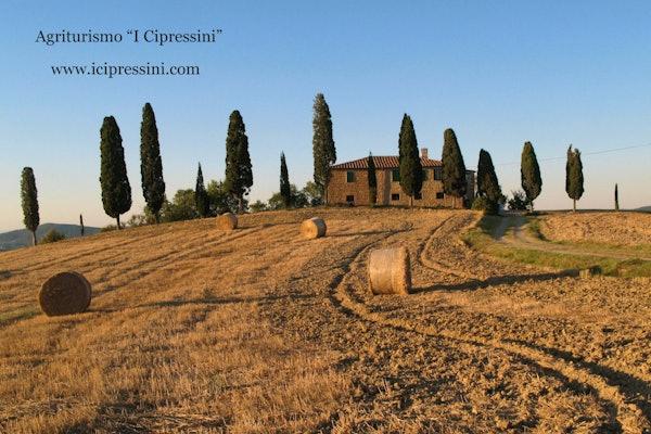 I Cipressini