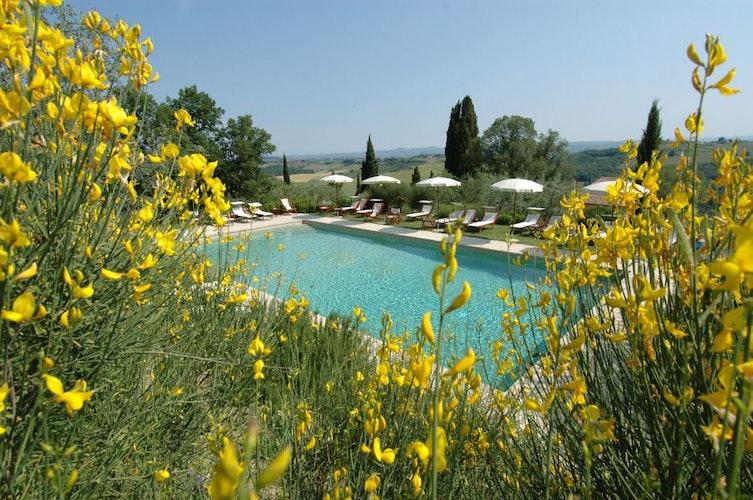 La piscina, circondata dagli oliveti, con sdraio ed ombrelloni