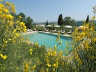 The large swimming pool is surrounded by olive trees  & lounge chairs