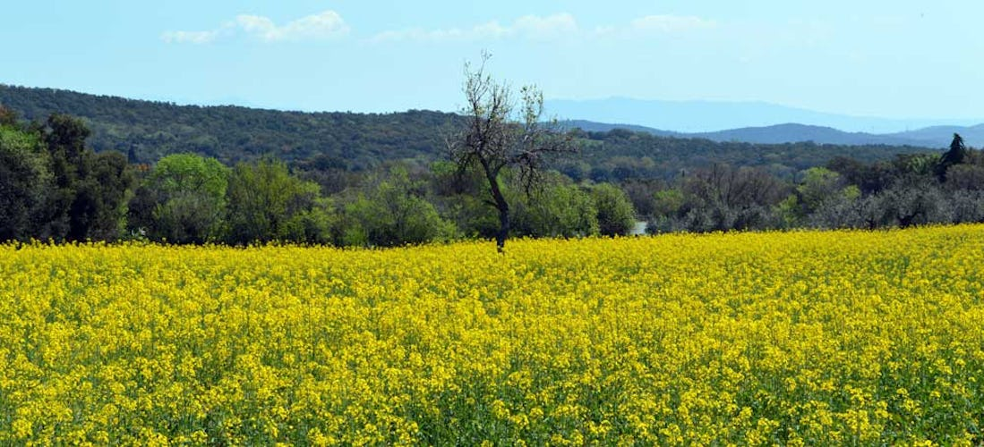 The Maremma is famous for is landscape, food and wine