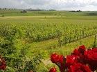 L'azienda agricola dispone di oltre 60 ettari di terreno coltivato