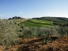 La Casa in Chianti: Chianti Classico Landscape