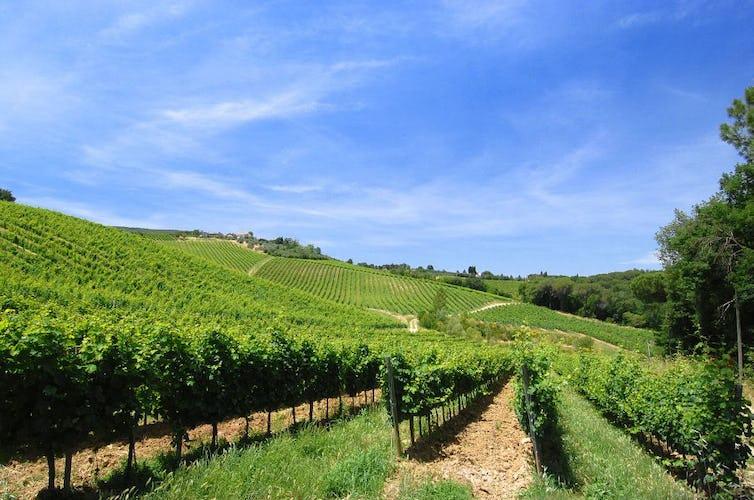 Oltre 70 ettari di vigneti ed oliveti circondano l'agriturismo