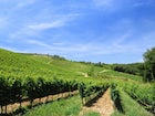 Over 70 hectacres in Tuscany near San Gimignano of vineyards & olives