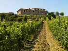 Farmhouse with vineyards in the province of Grosseto