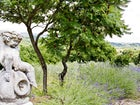 Sant Andrea Cellole - Il profumo di lavanda inebria l'atmosfera