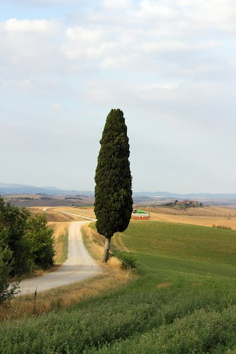 Cypress on crete senesi